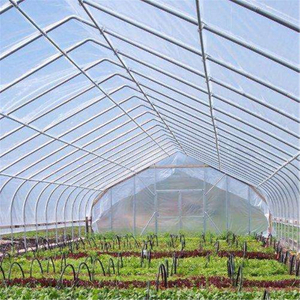 Plastic Hot sale Solar Venlo Polytunnel Hydroponic Agricultural Film Greenhouse for Vegetables/flowers/fruits/garden/tomato/crop/corn