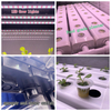 Vegetable Plants Hydroponic Farm Hidroponic System Greenhouse Equipment