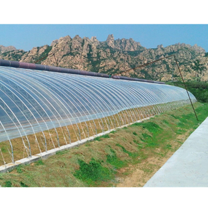 Economical Solar Agricultural Greenhouse with Anti Insect Net for Vegetable/Flowers/Fruits Growing