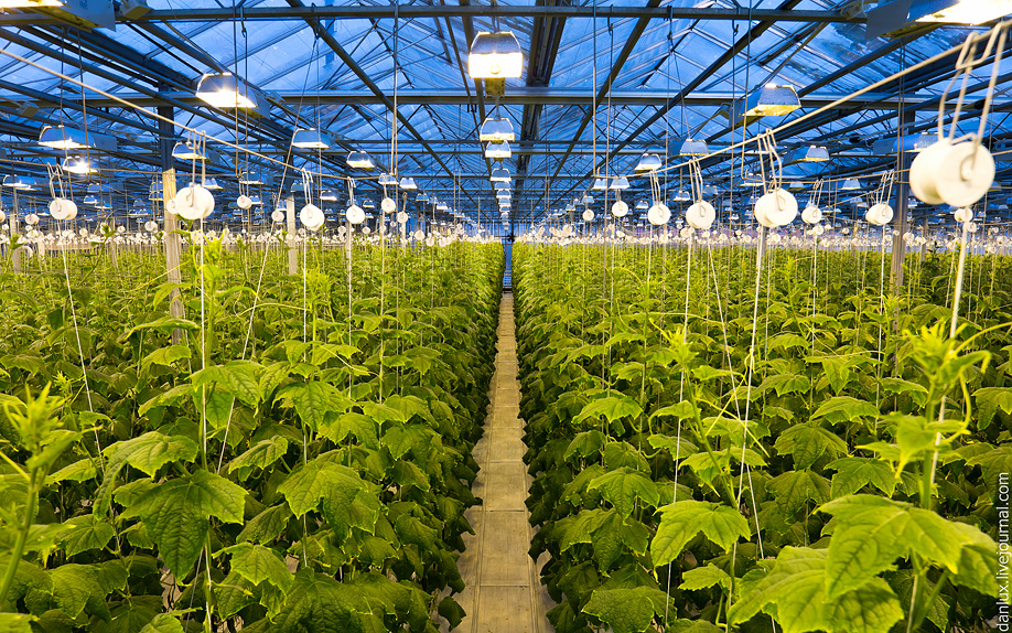 Full Spectrum COB LED Plant Grow Light for Hemp Greenhouse
