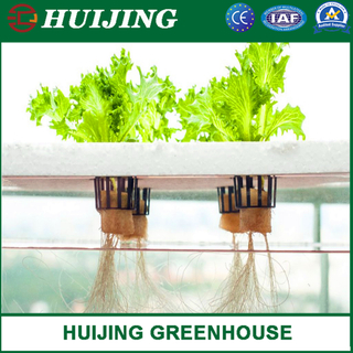 Vertical PVC Trough Hydroponic Strawberry Growing Systems in Greenhouse