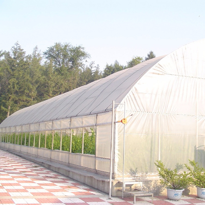Small Tunnel Greenhouse with Galvanized Steel Structure