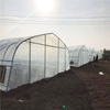 Low Cost Tunnel Greenhouse