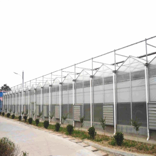 Customized Ecofriendly Tomato Growing Hydroponics System Venlo Polycarbonate Sheet Greenhouse