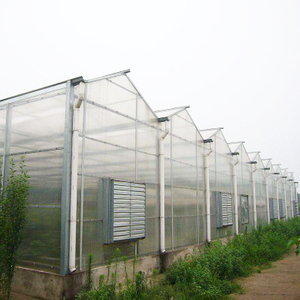 High Performance Venlo Polycarbonate Greenhouse for Hydroponics