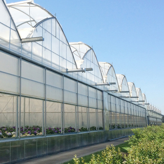 Multi-span PO/PE Film Greenhouse