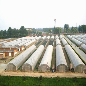 Professional Invernadero Single-span Plastic Film Tunnel Greenhouse for Vegetables