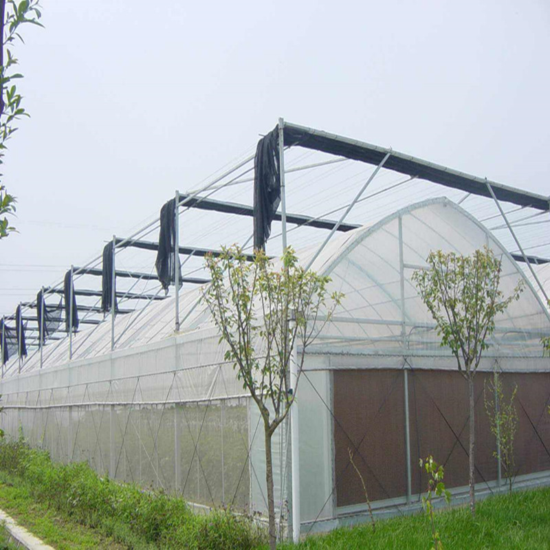 Commercial Multi-span Agricultural Hydroponic greenhouse inside shade System Greenhouse for Vegetables/flowers/fruits/garden/tomato/crop/corn