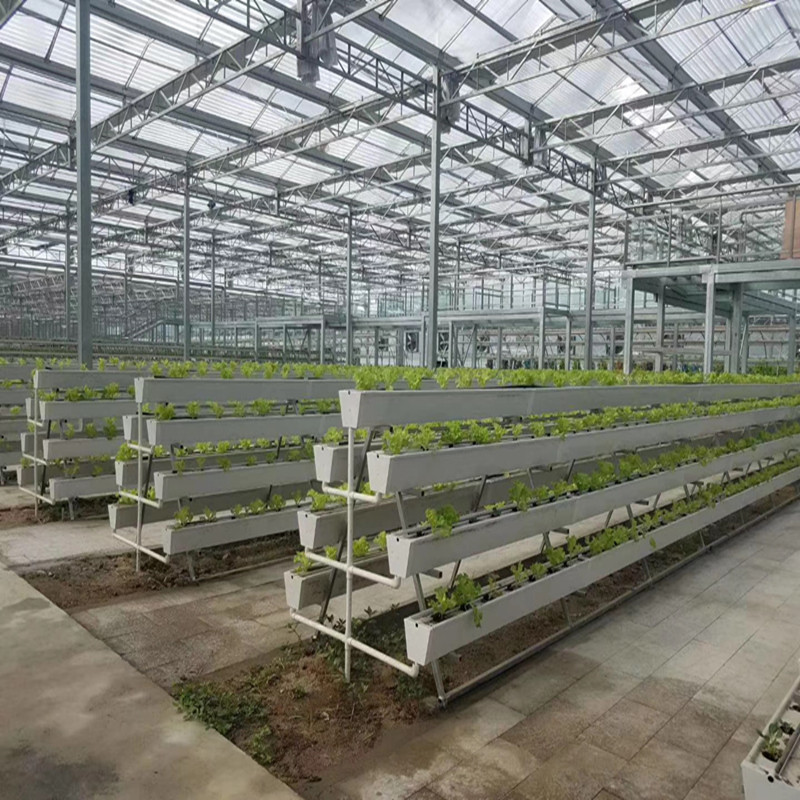 Commercial Greenhouse With High Quality Hydroponic System Multi-span Hydroponic Greenhouse for Vegetables/flowers/fruits/garden/tomato/crop/corn