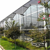 Professional Large Multi-span Smart Automatic Control Commercial Vegetable Cucumber Glass Greenhouse for Agricultural