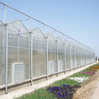 Complete Venlo Polycarbonate/Glass Covering Greenhouse Solution
