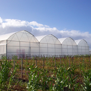 Cost effective Plastic Greenhouse