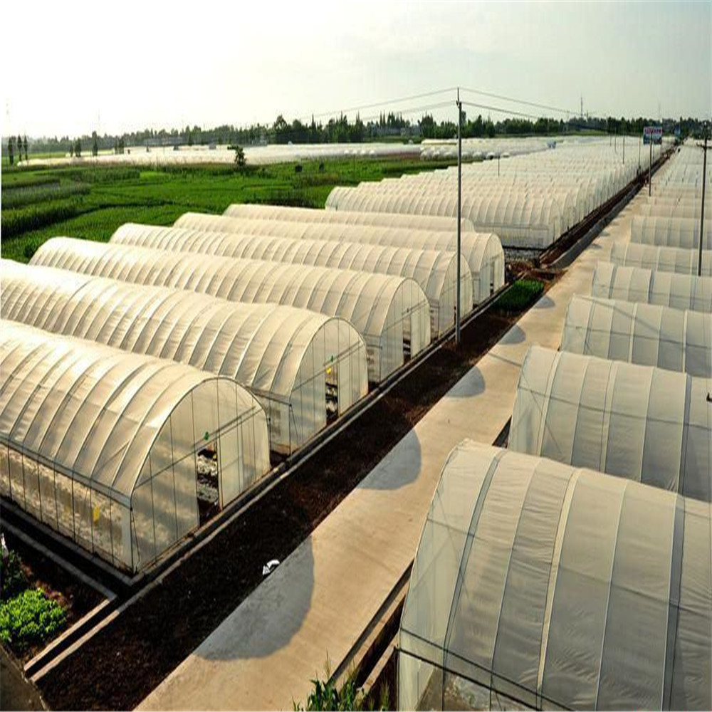 Low Cost Single Span Film Tunnel Greenhouse with Hydroponics System/Cooling System/Heating System