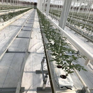 Hydroponic system Greenhouse Multi-span Venlo Agricultural Greenhouse for Vegetables/flowers/fruits/garden/tomato/crop/corn