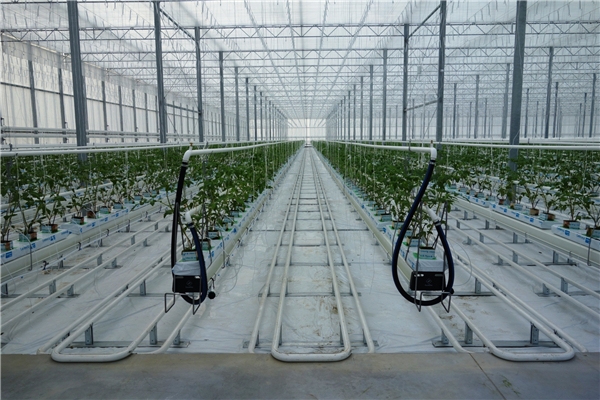 Gas/Coal Burning Heating System for Multi-Span Film Agriculture Greenhouse for Vegetables