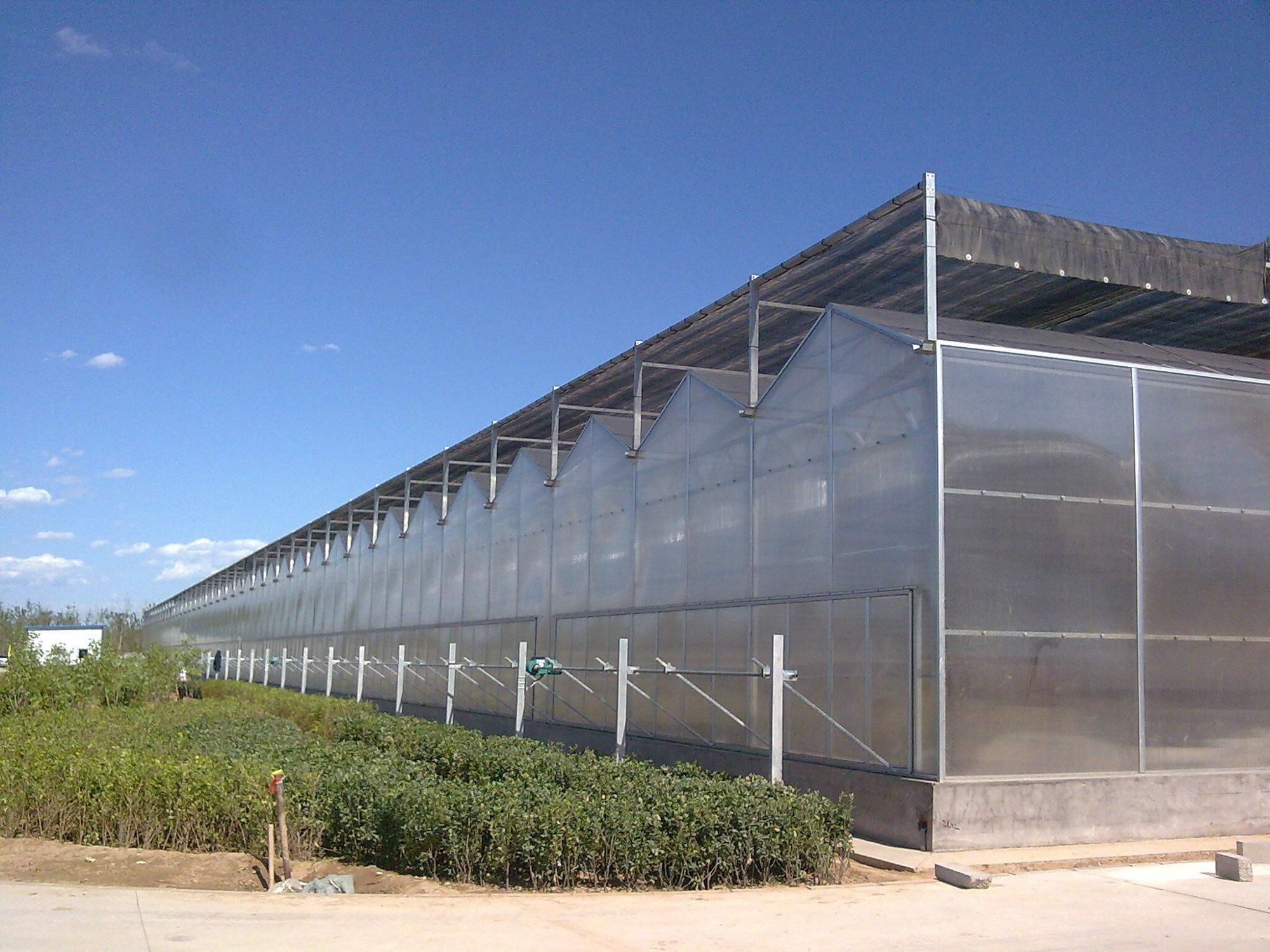 Side&Top Ventilation System for Factory Greenhouses