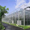 Multi-span Glass Venlo Hydroponic Polycarbonate Agricultural Greenhouse for Vegetables/flowers/fruits/garden/tomato/crop/corn with high quality