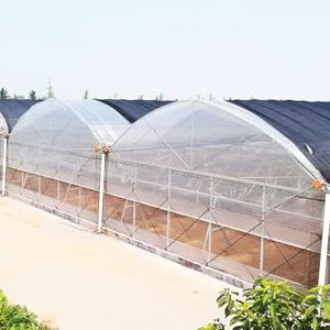 Gothic/Arch Type Multi-span Poly Greenhouse with Gutter Connected